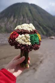 Bunga Edelweis di Bromo